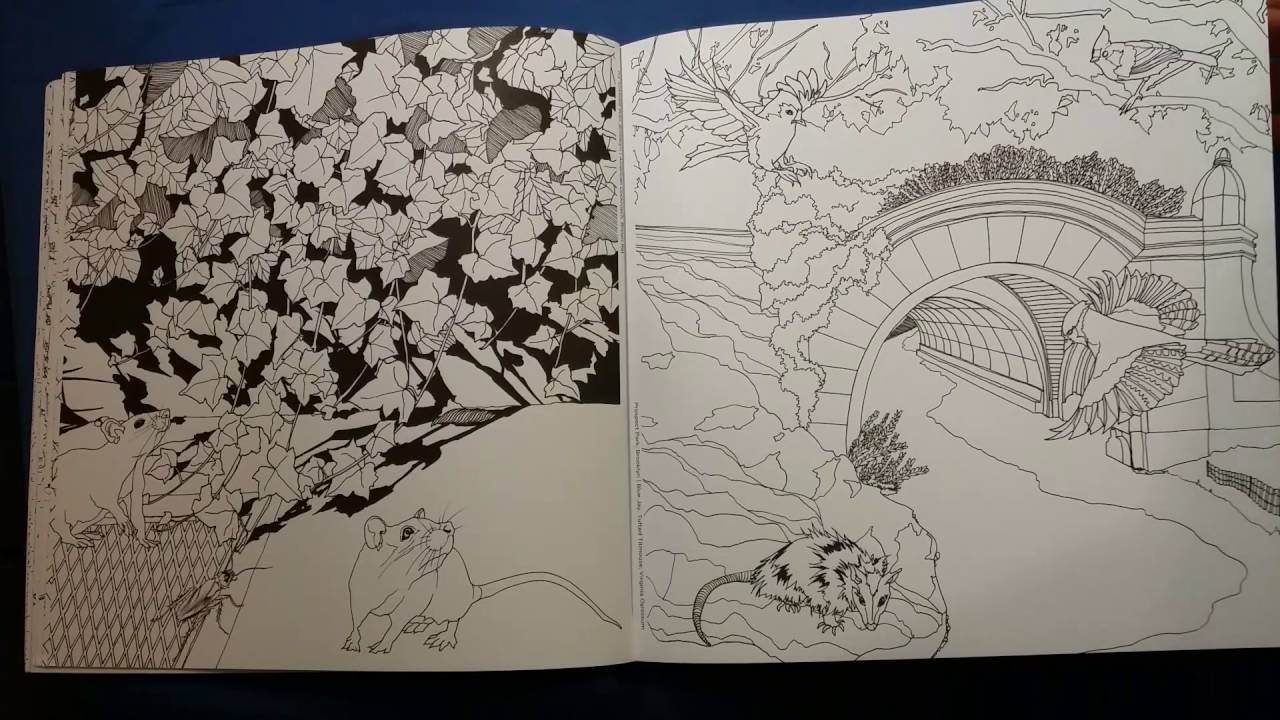 The Wildlife of New York Coloring book review - YouTube