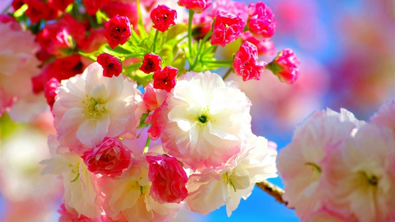 giovanni marradi spring romantic flowers cherry andreea petcu blossoms songs mesmerizing play