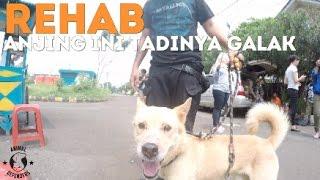 REHAB: Perbaikan Sikap Anjing yang Dominasi Terhadap Makanan thumbnail