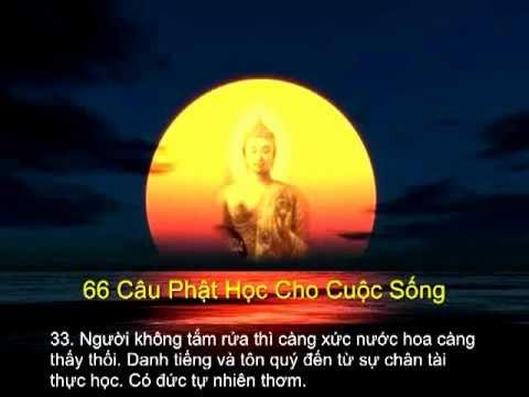 66 CAU PHAT HOC
