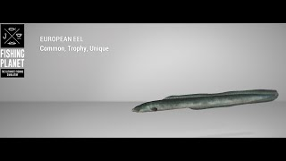 Fishing Planet Tiber River Trophy European Perch Feeder