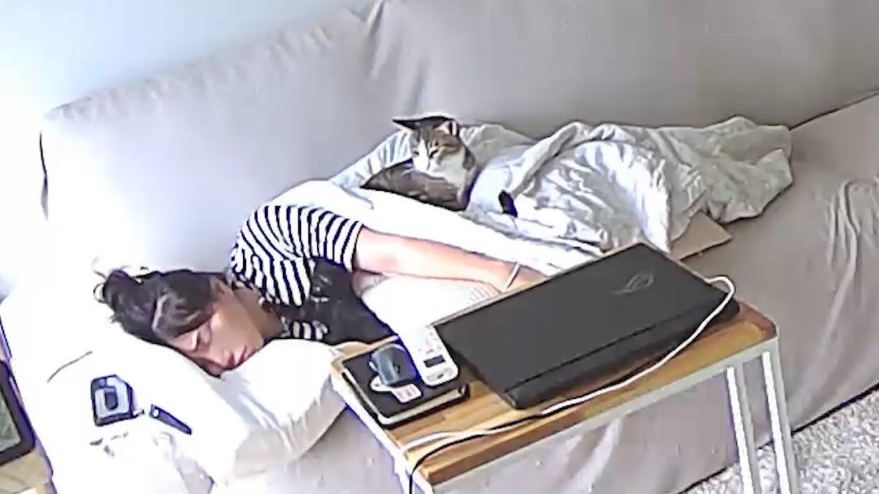 집사가 자는 동안 고양이들을 과연 뭘 할까!?