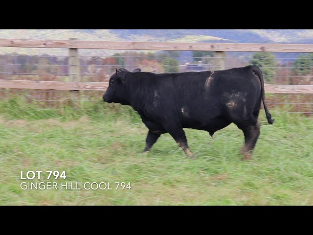 Ginger Hill Angus Lot 794