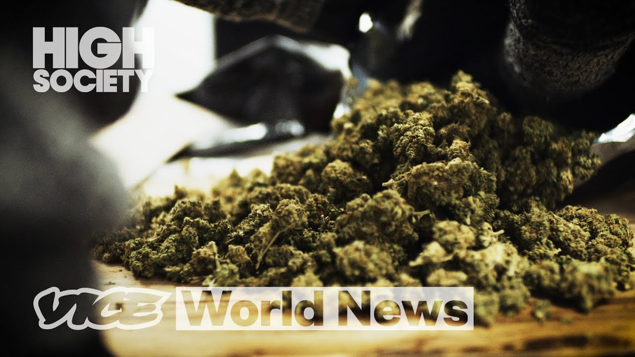 Download The Dangerous Rise of Contaminated Weed   High Society