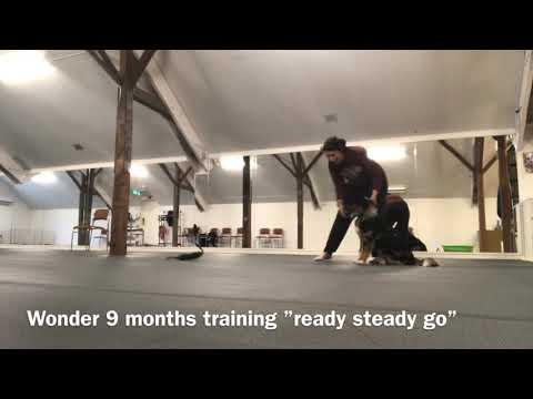 """Wonder 9months """"Ready steady GO"""" and """"back up"""""""