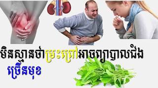 មិននឹកស្មានថា ម្រះព្រៅអាចព្យាបាលជំងឺបានច្រើនមុខ health tips