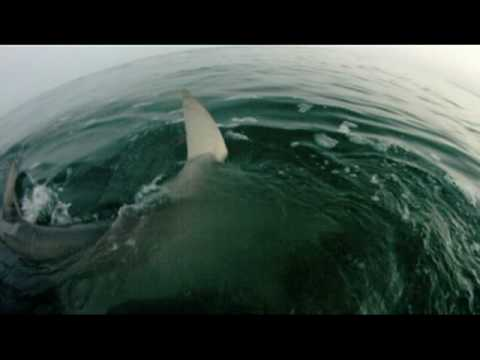 best-shark-attack-video