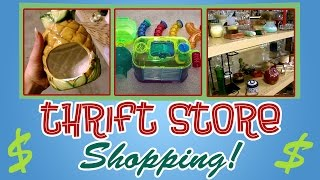 THRIFT SHOPPING! (For Hamster Supplies) PT. 1 Thumbnail