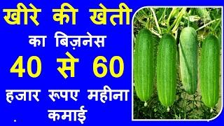 How To Plant Cucumbers-खीरे की खेती का बिज़नेस  40 से 60 हजार रूपए महीना कमाई