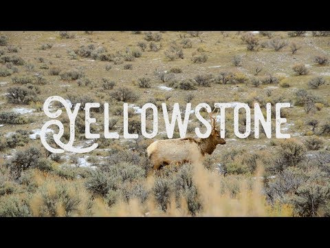 WINTER IN YELLOWSTONE | VACATION TRAVEL VIDEO