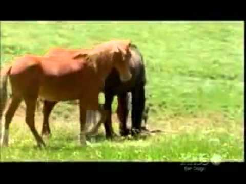 Сношение лошадей смотреть бесплатно