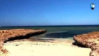 Шикарный отдых в Египте и море впечатлений от отдыха в Египте(, 2015-10-05T21:22:15.000Z)