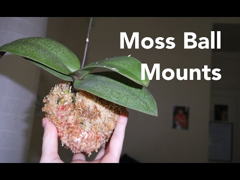 How to make Kokedama Moss Ball mount for orchids (◕‿◕✿)