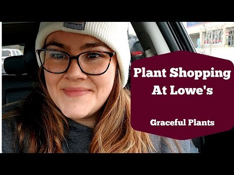 Plant Shopping At Lowe's | Nov 2019 | Graceful Plants
