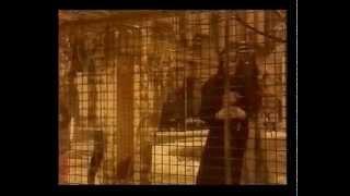 Tol & Tol  - Eleni (orginele clip)