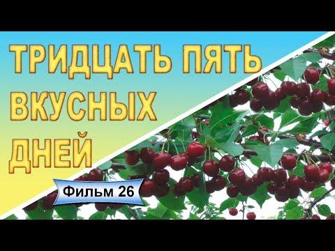 Поздние сорта дюков Ивановна Ночка Фильм 26из YouTube · Длительность: 4 мин26 с