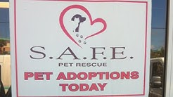 Featured Story SAFE Pet Rescue Inc