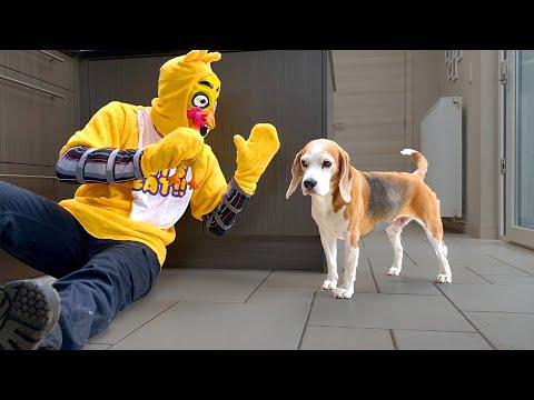 Dogs Pranked with Evil Chicken : Funny Dogs Louie & MarieKaynak: YouTube · Süre: 3 dakika22 saniye
