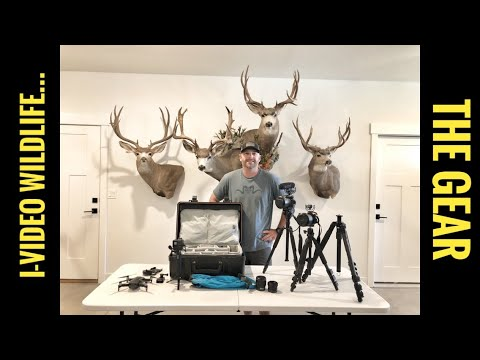 Filming Wildlife And Hunts - The Camera's I Use
