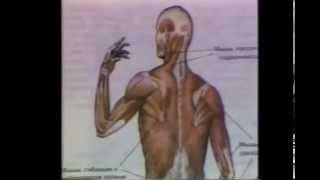 мышцы и движение