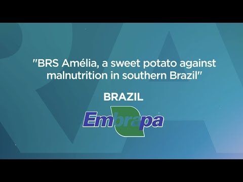 Competition 2019 - The BRS Amélia case, a sweet potato against malnutrition in Southern Brazil