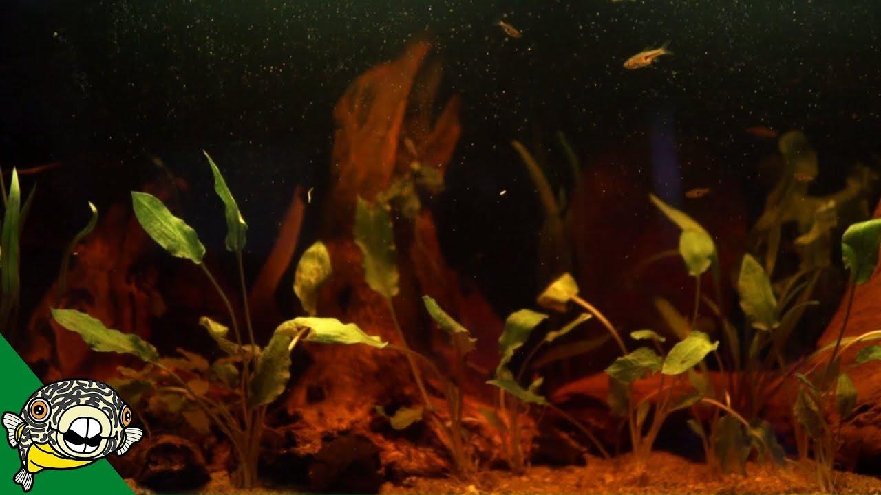 blackwater-aquarium-setup-for-bettas