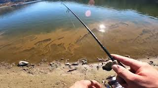 Trout fishing lake del valle