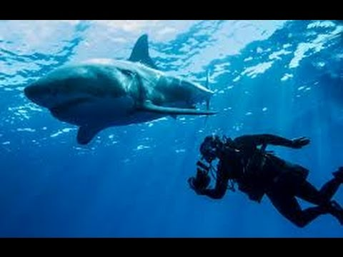 Worlds Deadliest Shark Attack Coast(full documentary)HD
