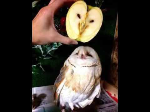 Детские загадки про овощи, ягоды и фрукты с ответами