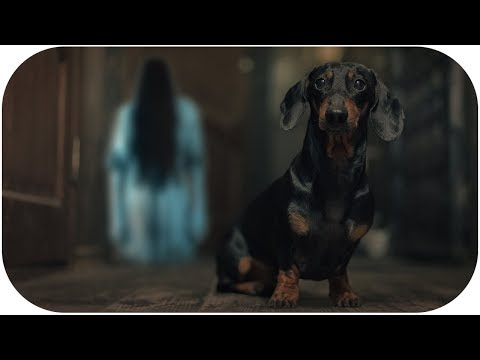 Save Me From This Nightmare!!! Creepy dog video!