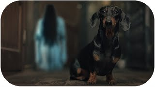 Save Me From This HELL! Creepy dog video!