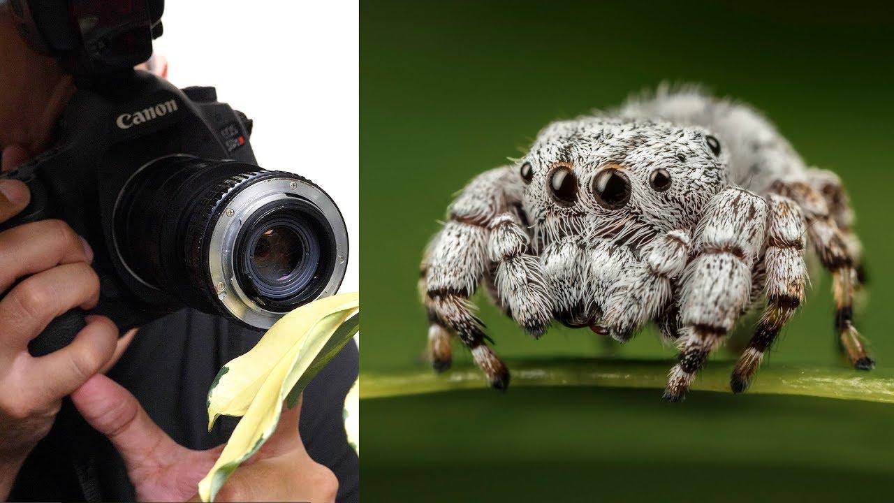 3TL'ye Süper Makro Fotoğraf Nasıl Çekilir ?