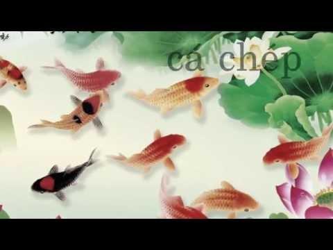 Dạy bé học các loài cá