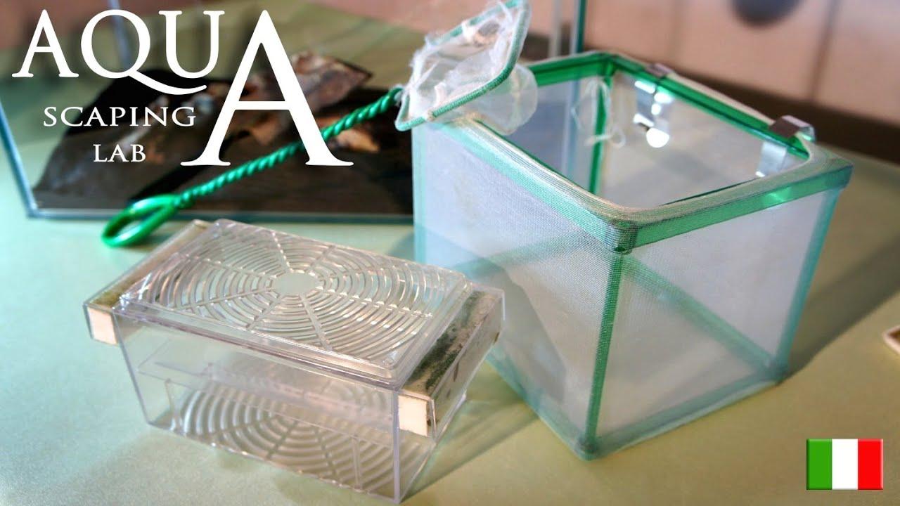Aquascaping lab allevamento avannotti e tipologie di for Sala parto pesci