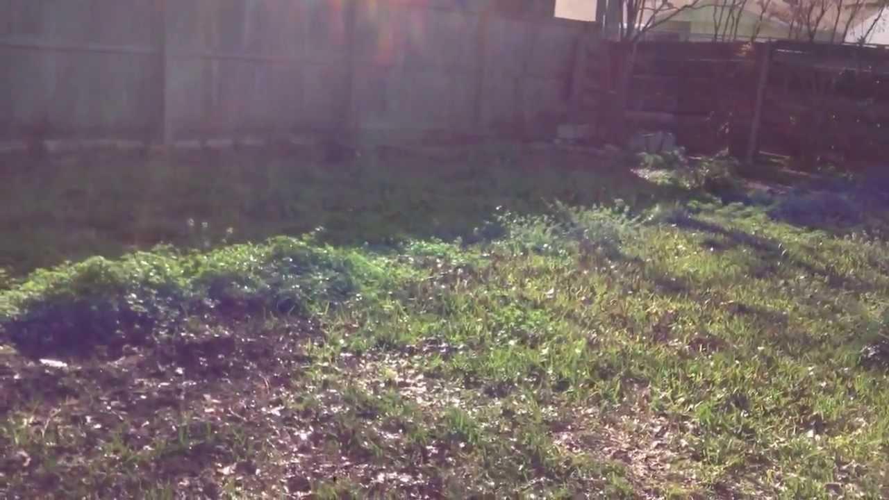 sick skunk distemper bites my dog pt1 youtube