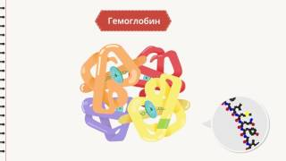 Белки в пищевых продуктах (Химия) - Binogi Россия