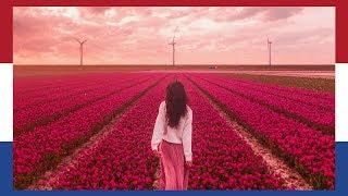 HOLLAND: AMAZING DUTCH TULIP FIELDS IN 5 MINUTES   TRAVEL VLOG IV