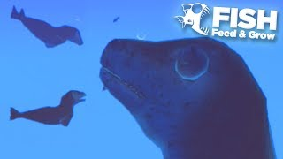 FLYING GIANT SEAL TAKES OVER THE OCEAN!!! - Fish Feed Grow