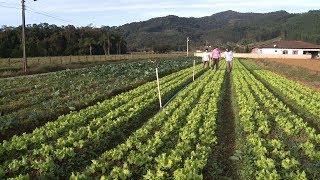 Baixar Olericultura em Luiz Alves
