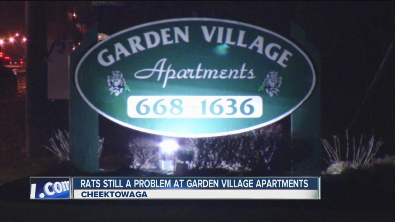 Rats Still A Problem At Garden Village Apartments   YouTube