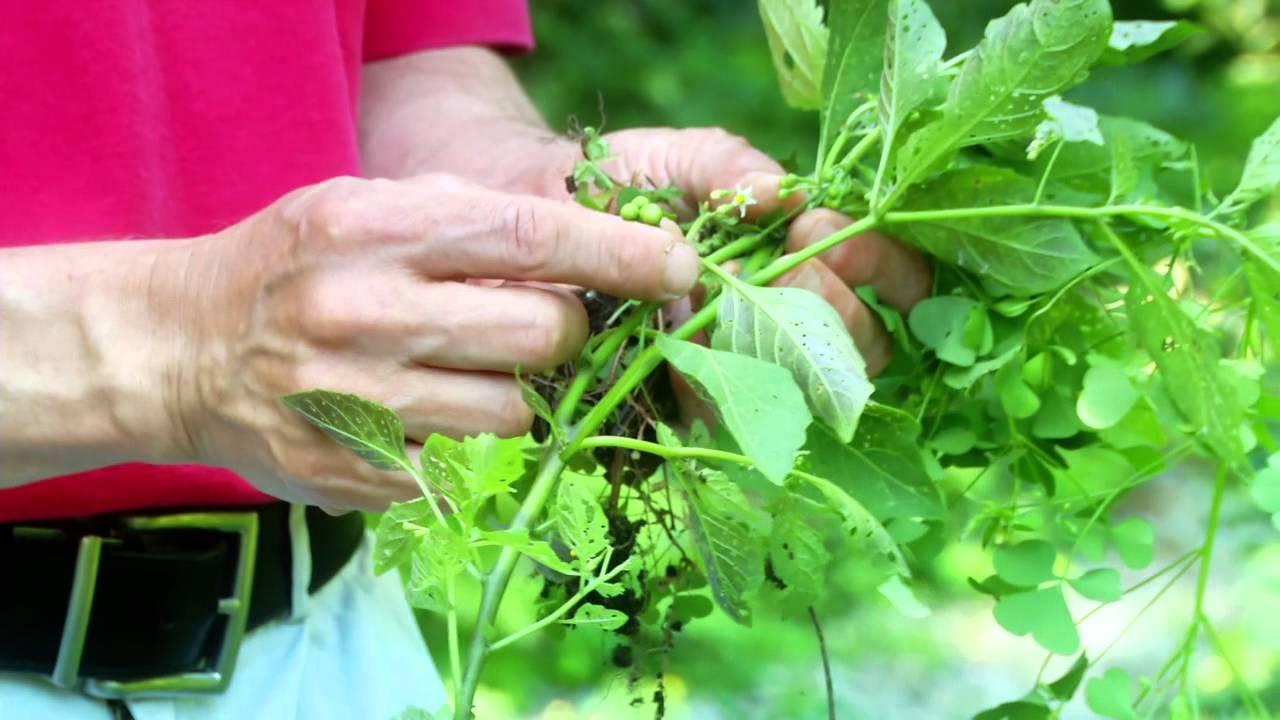 Stop weeds in flower beds - Stop Weeds In Flower Beds 55