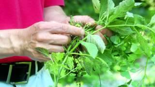 How to Prevent Weeds in Your Garden