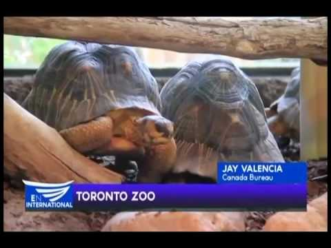 TORONTO ZOO - REPORT BY JAY VALENCIA FROM EBC CANADA BUREAU