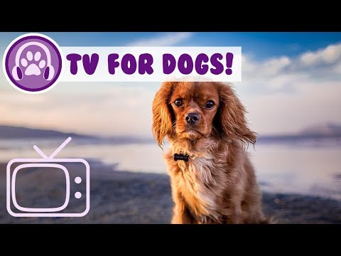 Dog TV: TV Entertainment for Lonely or Anxious Dogs! With Music!