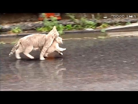 Cat Rescues Kitten from the Rain
