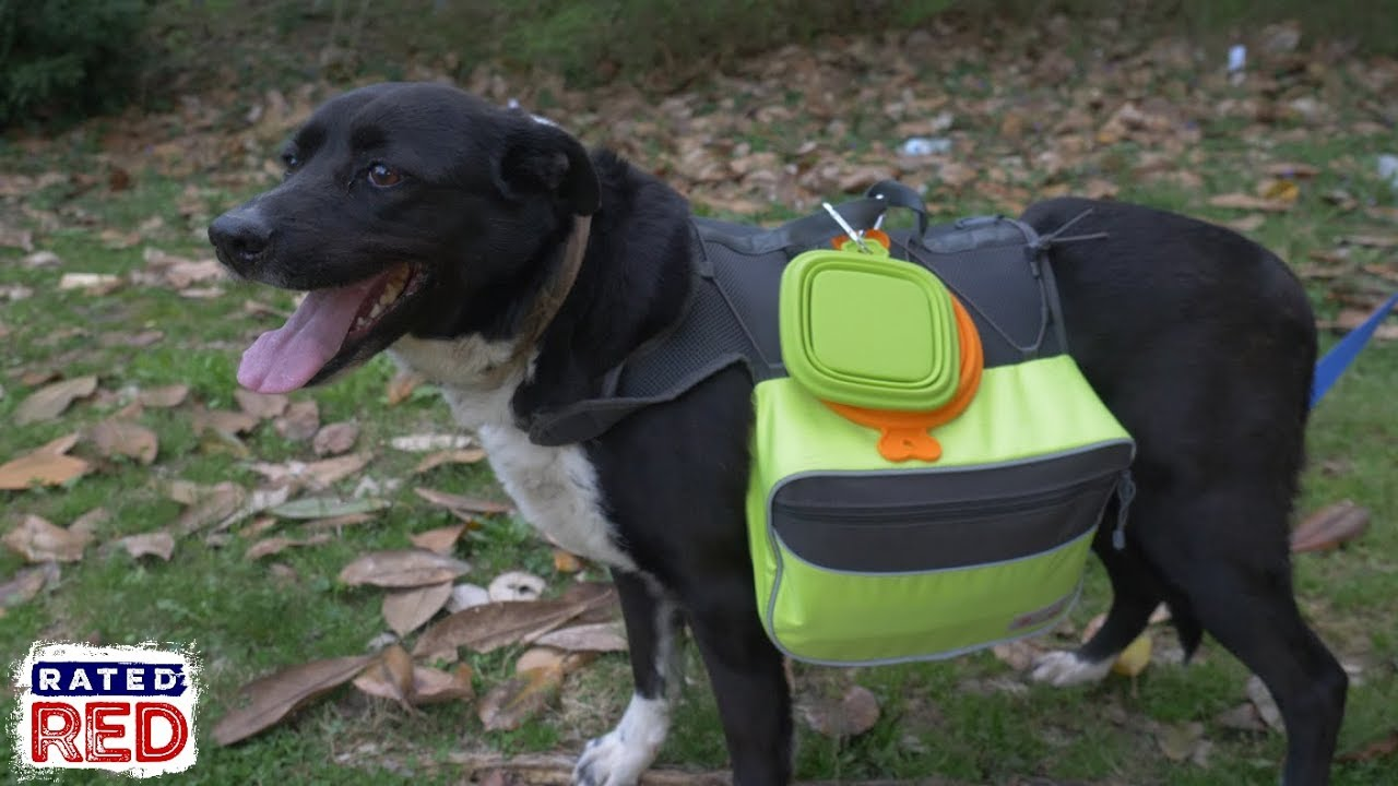 How To Pack A 72 Hour Bug Out Bag For Your Dog