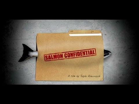 Salmon Confidential, Documentary About Salmon Farms In Canada & Diseased Salmon