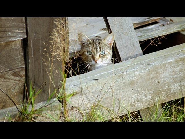 How to care for feral cats during the winter | MNN - Mother