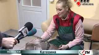 27.12.12 - В приюте чаще собаки бойцовских пород