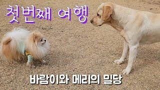 여행 브이로그 강아지 동반 여행 VLOG (애견펜션, …